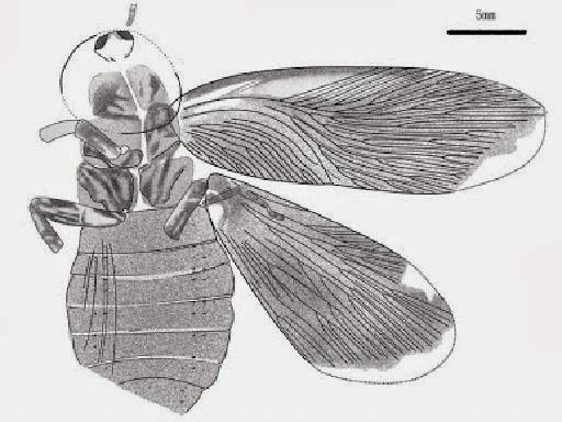 http://sciencythoughts.blogspot.co.uk/2013/09/a-fossil-cockroach-from-early.html