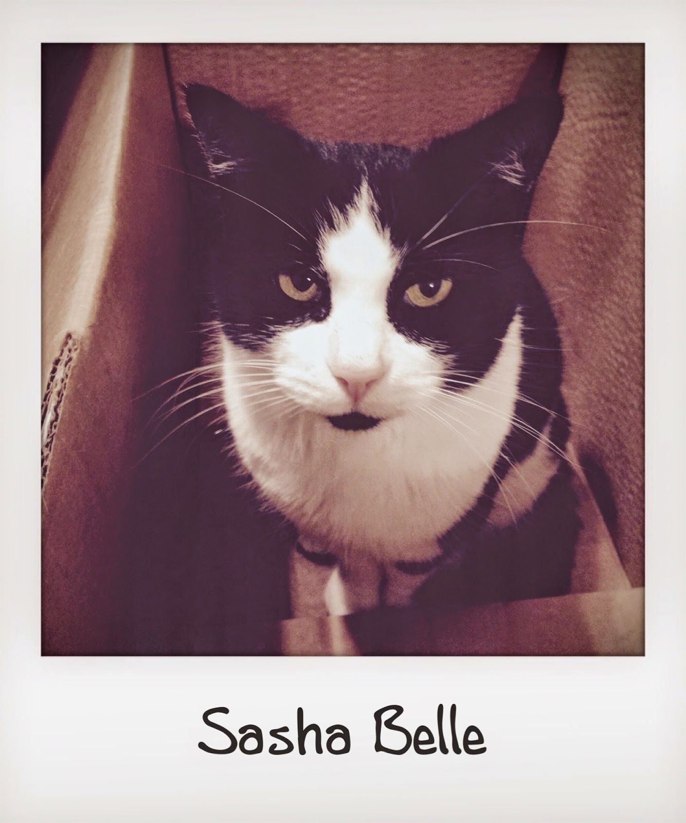 Miss Sasha Belle
