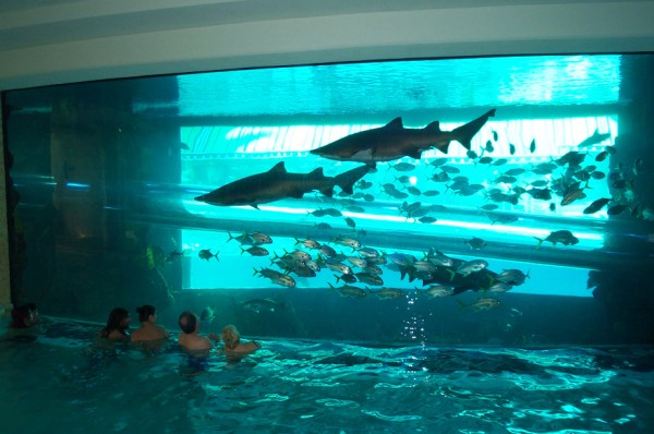 Water Slide Through Shark Tank In Vegas At Golden Nugget
