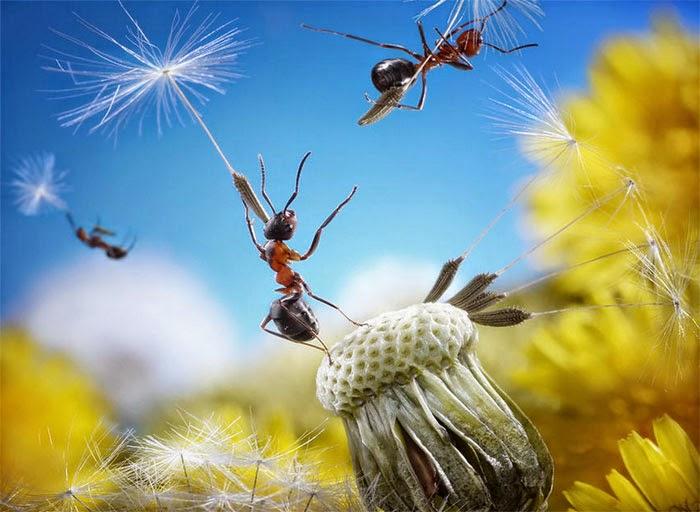andrey pavlov hormigas
