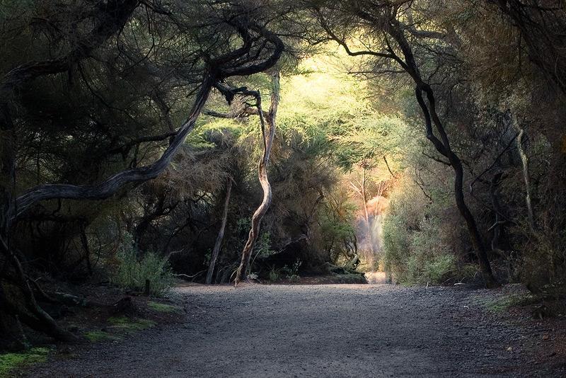 woods mystical