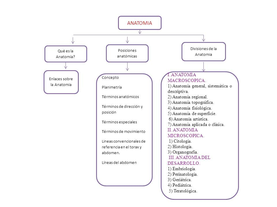 Encantador Cuál Es La Anatomía Sistemática Inspiración - Imágenes de ...