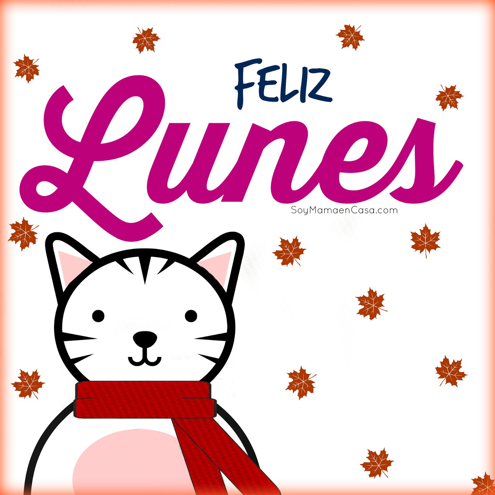 gato, lunes, frio, otoño