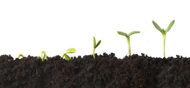 Faites croître vos Collaborateurs, devenez Manager Jardinier