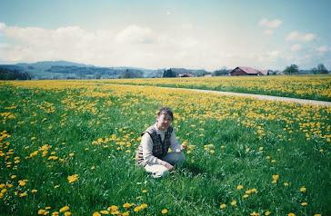 瑞士田野,一望无际的蒲公英花