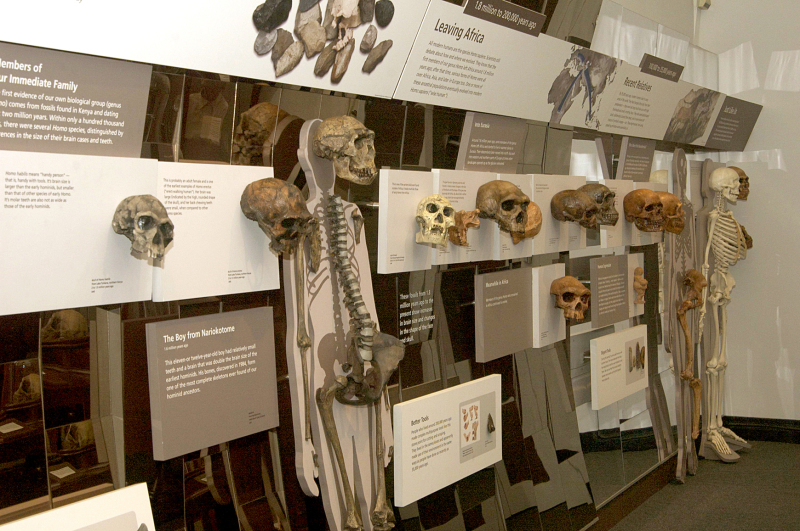 World's largest human fossil cast collection opens for public