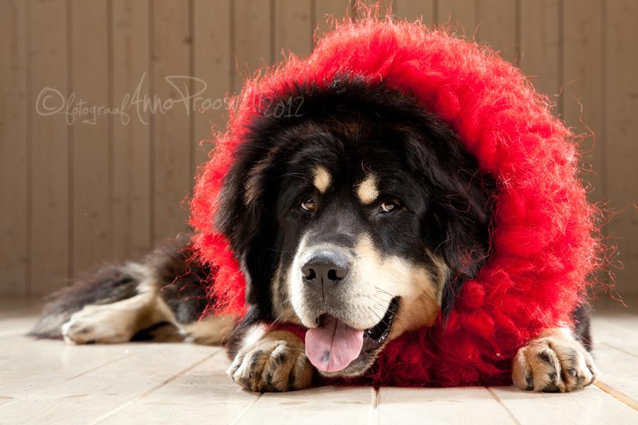koer-fotostuudios-koera-portree