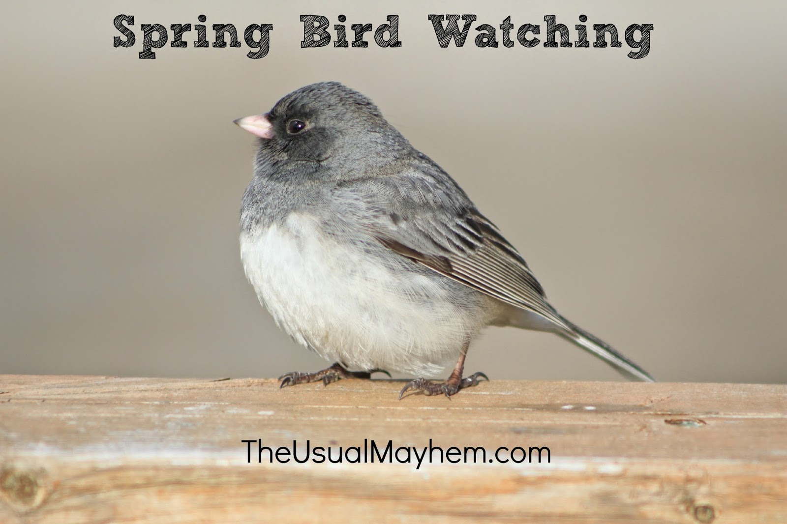 spring bird watching