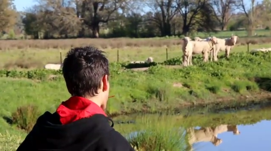 "Sam Matthews - ""Jorge and the running of the sheep"" Mockumentary"