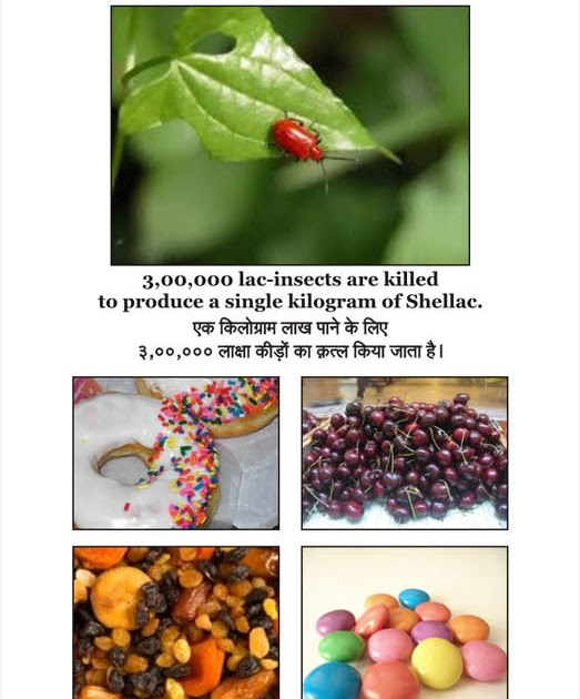 knowing yourself 3 00 000 lac insects are killed to produce