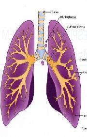 tous contre le cancer cancer du poumon examens et diagnostic. Black Bedroom Furniture Sets. Home Design Ideas