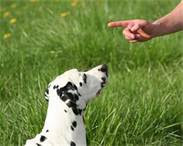 Great Tips For Training Your Dog