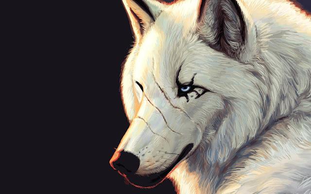 Lobo Blanco con Cicatrices y Ojos Azules Fondos de Pantalla de Animales