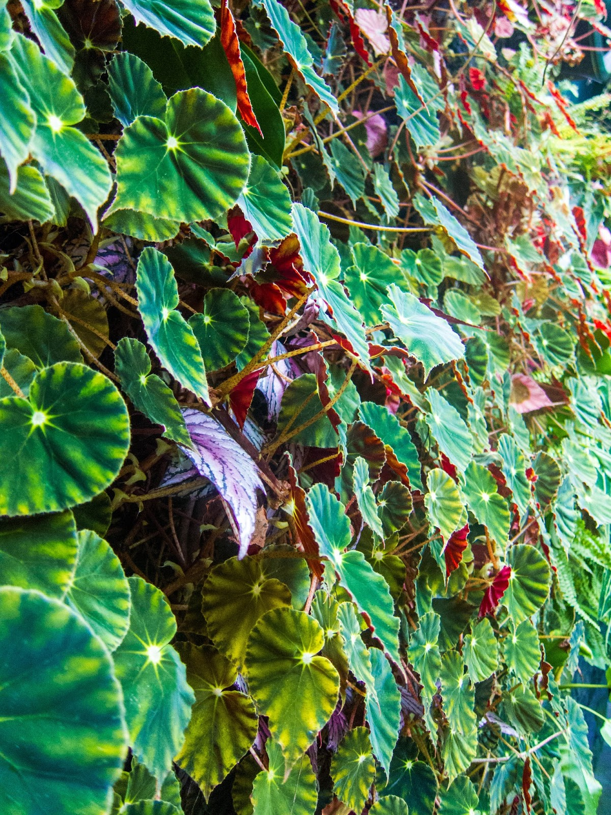 Green and red leaves in Gardens by the Bay in Singapore | Svelte Salivations - Travel