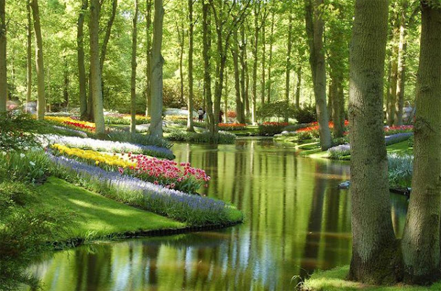Keukenhof Gardens Netherlands woods forests forks twilight