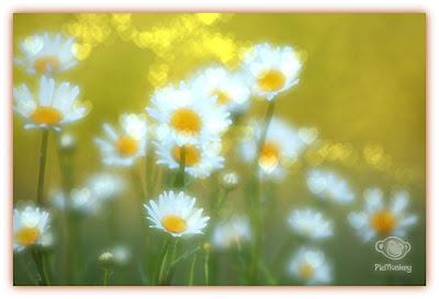 Sample de colagem do site de edição de fotos PicMonkey