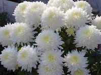 aranjamente nunta din flori naturale