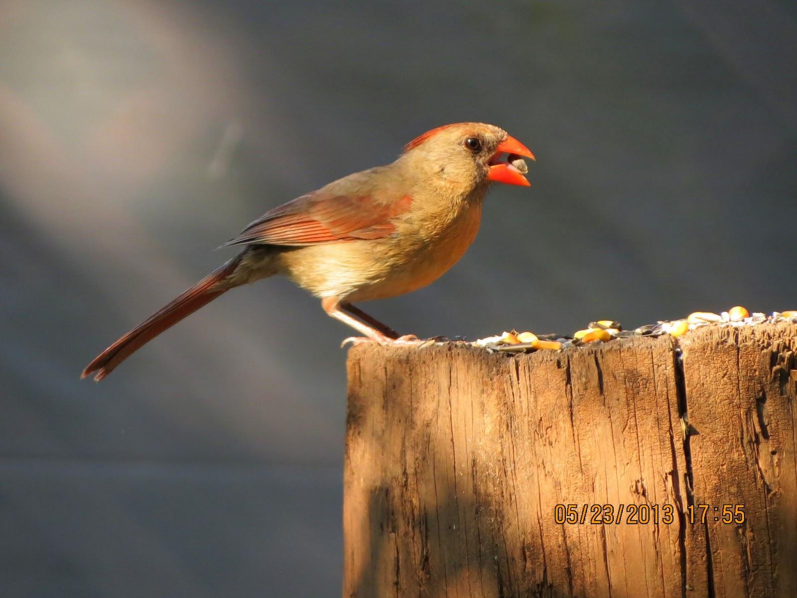 Where Do Birds Get Their Songs? | Mental Floss