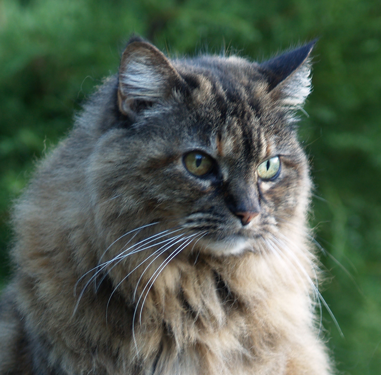 Krissy (1991-2010)