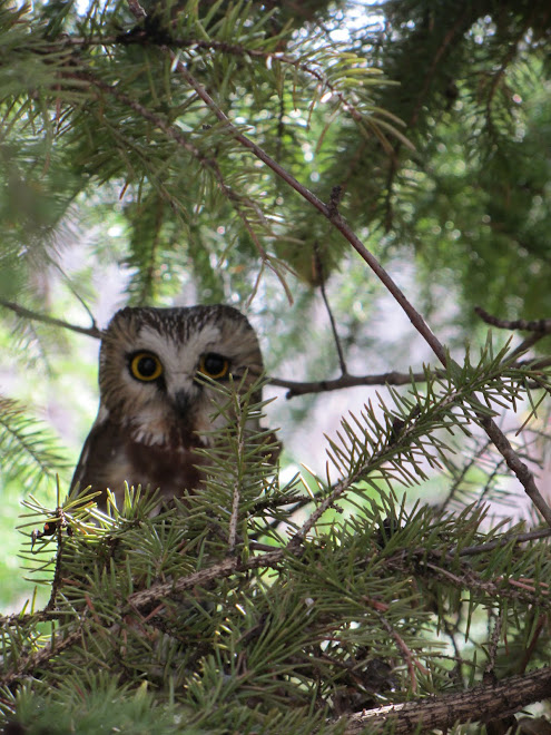 Sowet Owl...