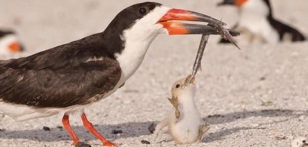 Срж и  црвић