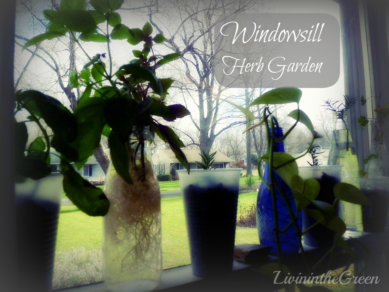 livin u0027 in the green windowsill herb garden