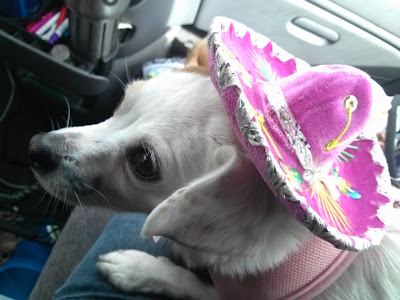 My dog in her little sombrero for Halloween