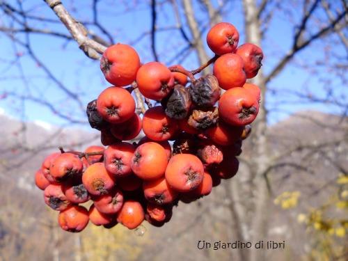 Ungiardinodilibri frutti sorbo