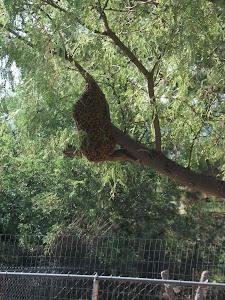 Swarming bees!