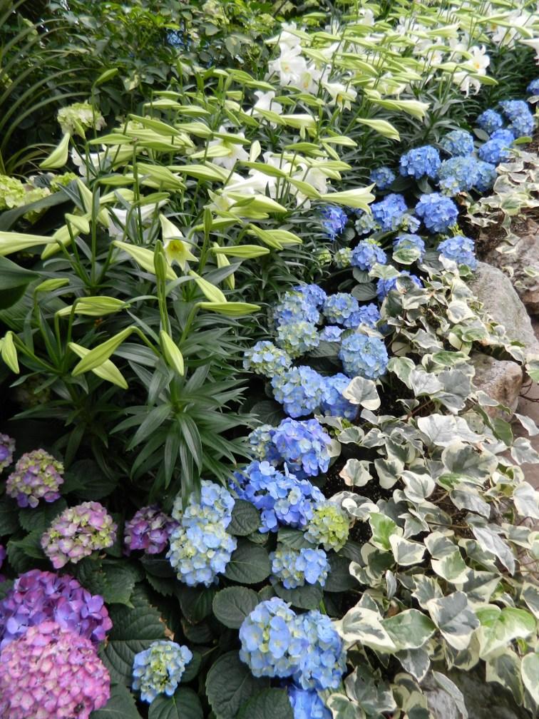 Allan Gardens Conservatory Easter Flower Show drift white lillies blue hydrangeas by garden muses: a Toronto gardening blog