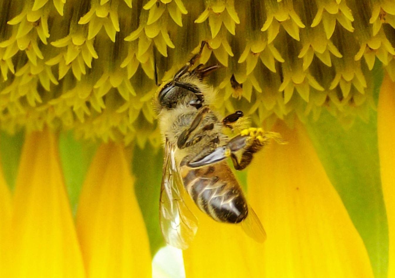 kukka ja mehiläinen suomi pornovideot
