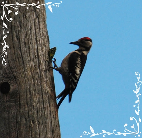 how to get a woodpecker to stop pecking your house