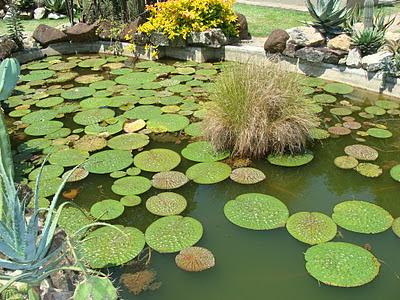 Fotos Jardim Botânico