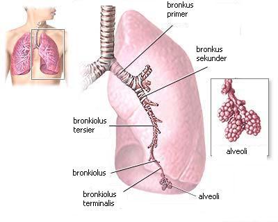 Obat Tradisional Kegagalan Pernafasan