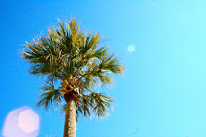 Palm Trees - I miss them.