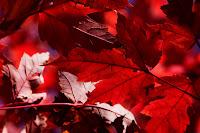 frunze de toamna poze