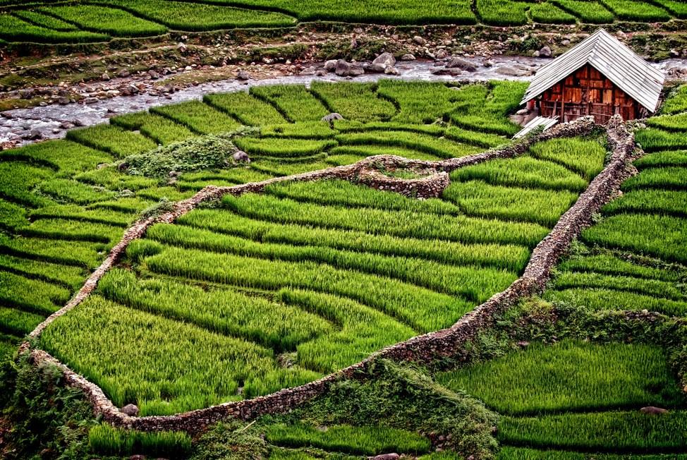 Fotografi Landscape dengan tema Sawah Tropis di Katulistiwa wallpaper