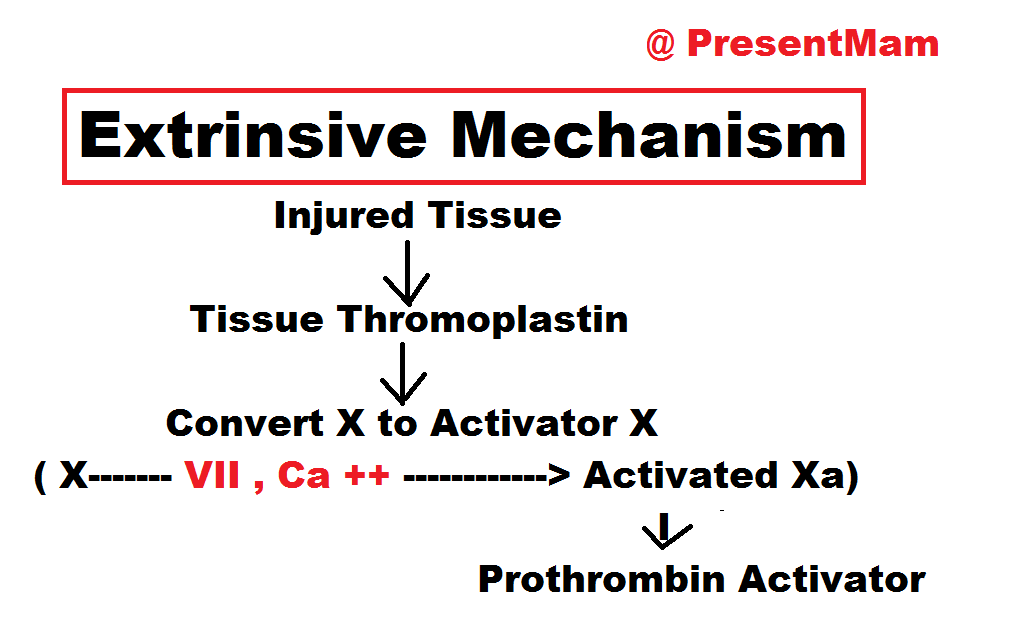 anti clotting mechanisms Anti clotting mechanisms powerpoint presentation, ppt - docslides- dr  mahvash khan mbbs, mphil occurs inside the blood vessels, it is also called fibrinolysis.