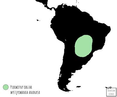 mapa występowania pierwotnego obszaru ananasa pineapple