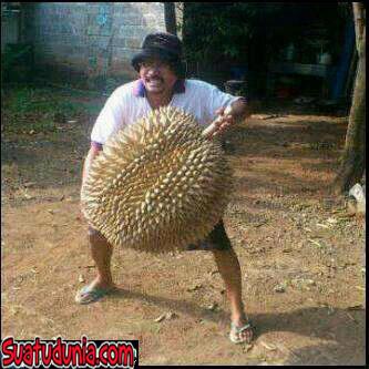 Gambar Lucu Panen Durian Raksasa