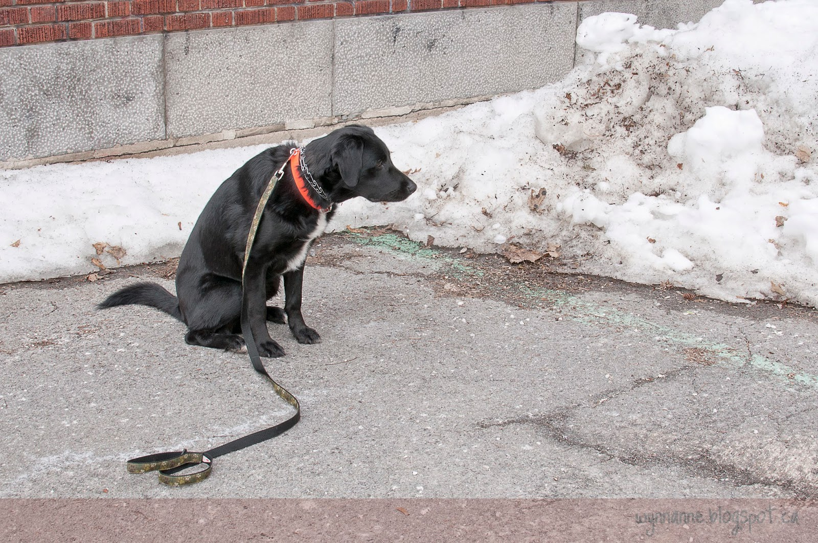 Sit Happens Dog Training Reviews