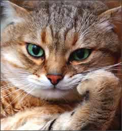 Random Thinking Cat