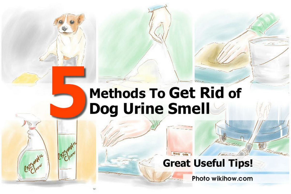 5 Methods To Get Rid Of Dog Urine Smell Handy Diy
