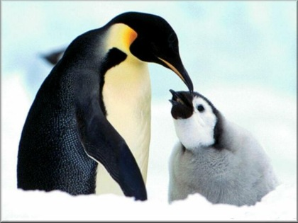 Animales que nacen del huevo para colorear - Imagui