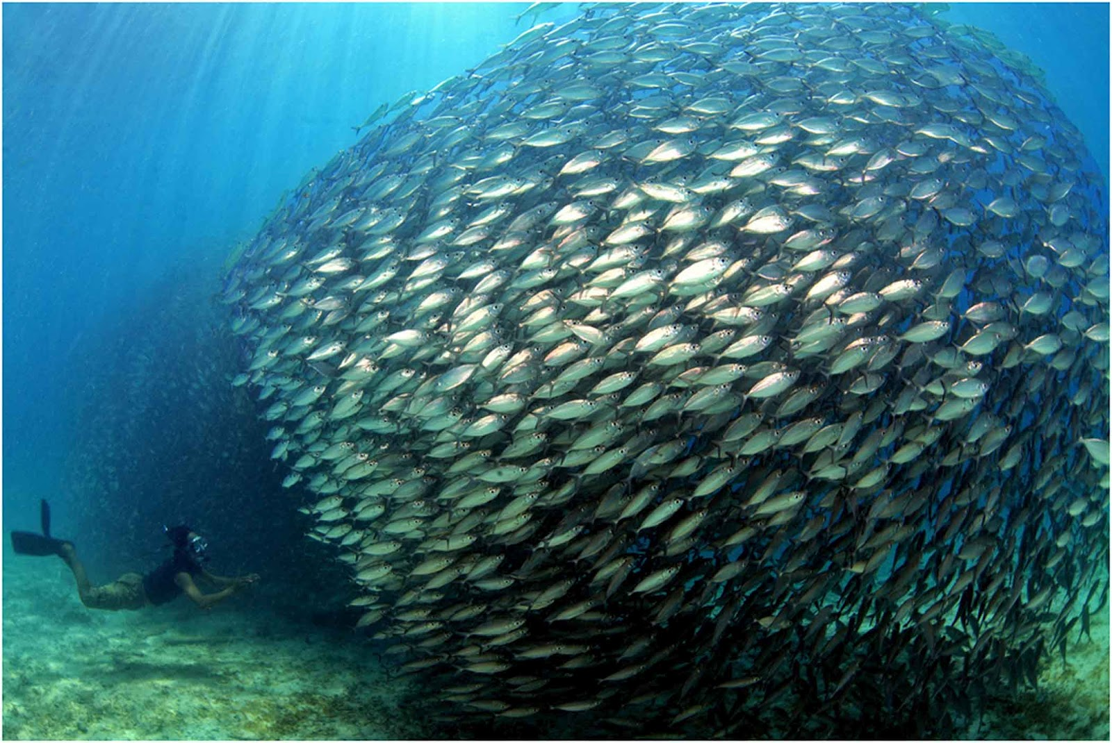 Learning from fish schools