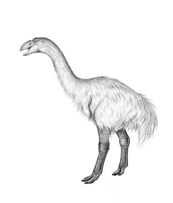 australia prehistorica Dromornis