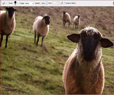 photoshop , silgi aracı , pixel temizleme , kuzu resimleri