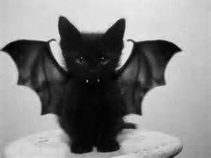 costumes for cats and kittens