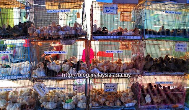 Sabah Tamu Jalan Gaya