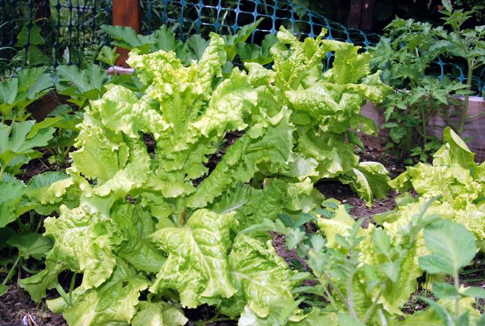 mainely portland more vegetable garden backyard porn